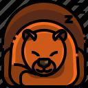 autumn, bear, hibernating, hibernation, inactivity, sleep, winter