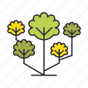 blossom, flora, forest, nature, plant, spring, tree
