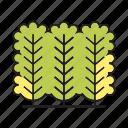 autumn, autumn tree, forest, nature, plant, spring, tree