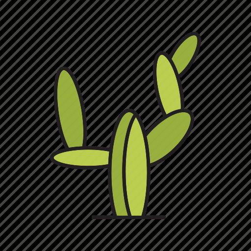cactus, desert, forest, palm, plant, tree icon