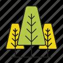 autumn tree, flora, forest, nature, pine, plant, tree