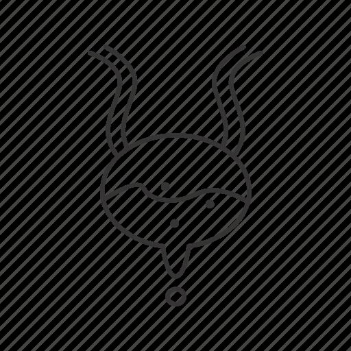 Bladder, organ, ureter icon - Download on Iconfinder