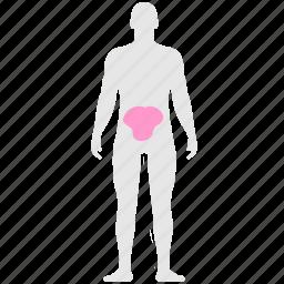 abdomen, belly, body, gastric, health, stomach icon