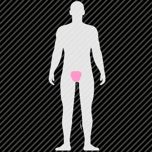 body, genital, human, man, organ, pain icon
