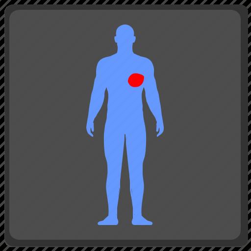 heart, human, man, organ, ray, x icon