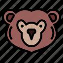 grizzly, bear, wildlife, mammal, animal