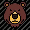 honey, bear, wildlife, mammal, animal