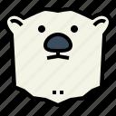 polar, bear, wildlife, mammal, animal