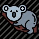 bear, wildlife, mammal, animal, koala