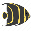 angelfish, animal, french, ocean, reef, sea icon
