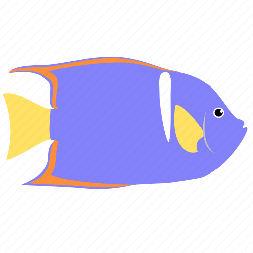 angelfish, animal, king, ocean, reef, sea icon