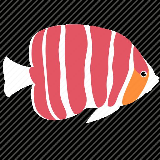 angelfish, animal, ocean, pepperment, reef, sea icon