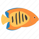 angelfish, animal, flame, ocean, reef, sea