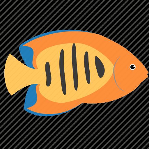 angelfish, animal, flame, ocean, reef, sea icon
