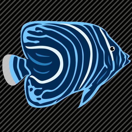 angelfish, animal, juvenile, ocean, reef, sea icon