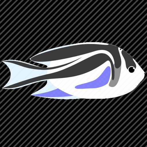 angelfish, animal, bellus, ocean, reef, sea icon