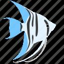 angelfish, animal, blue, ocean, reef, sea, zebra icon