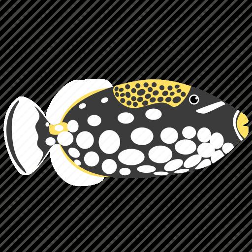 animal, clown, ocean, reef, sea, triggerfish icon