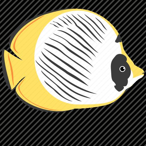 animal, butterfly, fish, ocean, panda, reef, sea icon