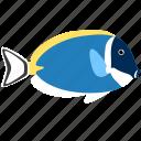 blue, ocean, tang, powder, animal, fish, sea
