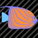 angelfish, animal, blue, ocean, reef, ring, sea icon