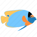 angelfish, animal, blueface, ocean, reef, sea