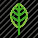 garden, green, leaf, nature, plant, tree