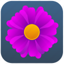bloom, flower, plant, violet icon