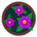 beautiful, flower, pot, violet icon