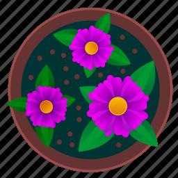 beautiful, flower, pot, violet icon