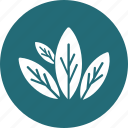 aromatherapy, herbal, herbal treatment, leaves, petals icon
