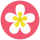 beauty, flower, frangipani, plant, plumeria, spa, wellness icon