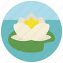 flower, beauty, lotus, wellness, water, spa, lily