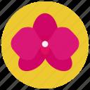 beauty, flower, red, spa, wellness