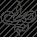 snake, reptile, animal, python, wild
