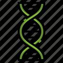 dna, chromosome, genetics, biology, education, sciences, structure