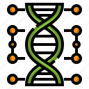 genetic, chromosome, structure, education, dna