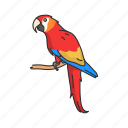 animal, bird, flying creature, macaw, parrot, pet, vertebrates