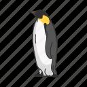 aquatic bird, bird, flippers, penguin, baby penguin, animal