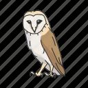western barn owl, barn owl, bird, nocturnal, owl, talons, animal