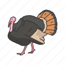 animal, bird, domestic animal, turkey, vertebrates, wild turkey icon