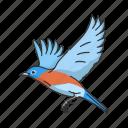 animal, bird, blue bird, eastern bluebird, flying creature, vertebrates