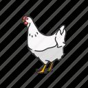 domestic animal, bird, galinaceous bird, cock, chicken, animal