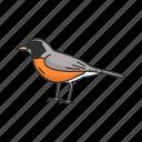 animal, baltimore oriole, bird, ochre oriole, oriole, passerine bird icon