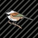 animal, bird, chickadee, passerine bird, songbird, vertebrates icon