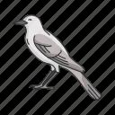 bird, mimic bird, feather, passerine bird, vertebrates, flying creature, animal