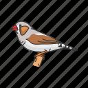 animal, bird, finch, passerine bird, vertebrates, zebra finch icon