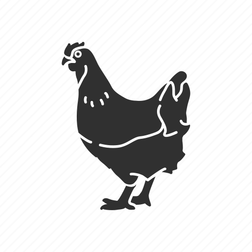 animal, bird, chicken, cock, domestic animal, galinaceous bird icon