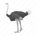 animal, bird, domestic, exotic, feathered, ostrich, wild icon