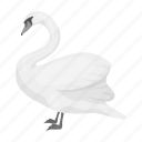 exotic, swan, zoo, animal, wild, feathered, bird